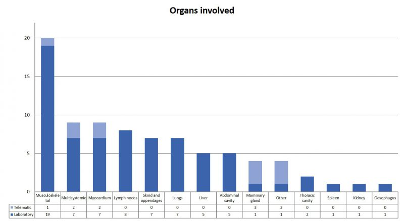 Distribution by organs of the consultations received. Most muscle / myocardial samples were to rule out cysticercosis and lymph nodes / thoracic cavity to rule out Tuberculosis.