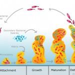 Biofilms bacterians: per què ens haurien d'importar?