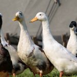 Viral Comments (35): H5N8, infectious waste are, infectious waste do not become