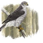 First detection of West Nile Virus in a bird of prey in Catalonia