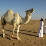 The Middle East respiratory syndrome coronavirus (MERS-CoV) follows a seasonal pattern in the Arabian Peninsula