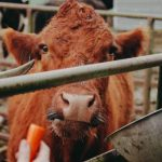UV radiation and SurePureTurbulator: safer food supplements for animals