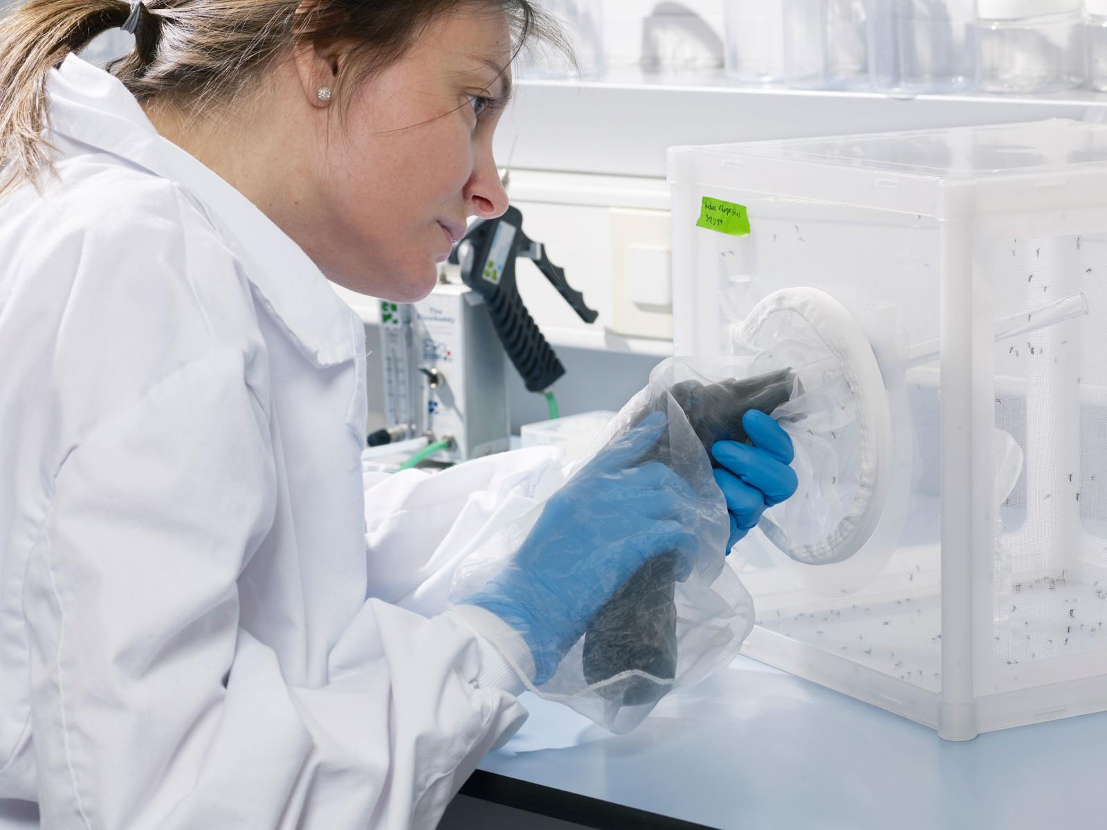 El programa de Sanitat Animal treballa amb malalties de declaració obligatòria així com amb programes específics de vigilància i control epidemiològic.