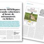 'MIXOlepus' segueix treballant contra la mixomatosi que afecta les llebres